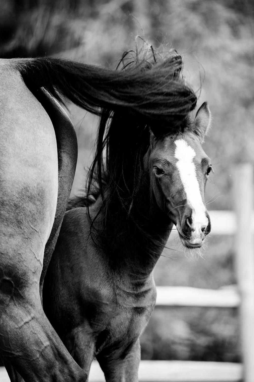 Equine Photography Saratoga Springs NY15.jpg