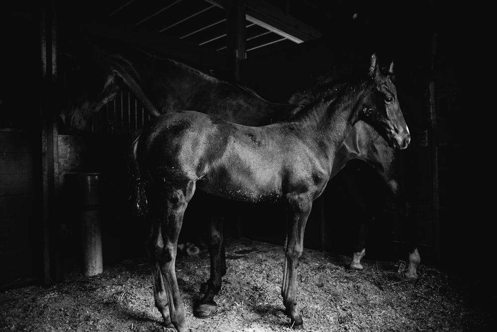 Equine Photography Saratoga Springs NY16.jpg