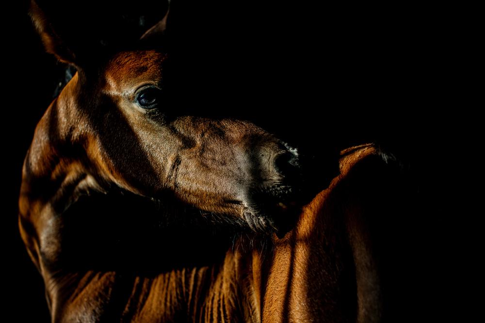 Equine Photography Saratoga Springs NY17.jpg