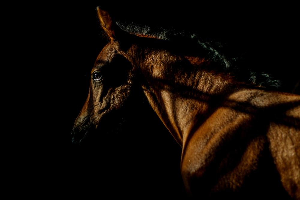 Equine Photography Saratoga Springs NY19.jpg