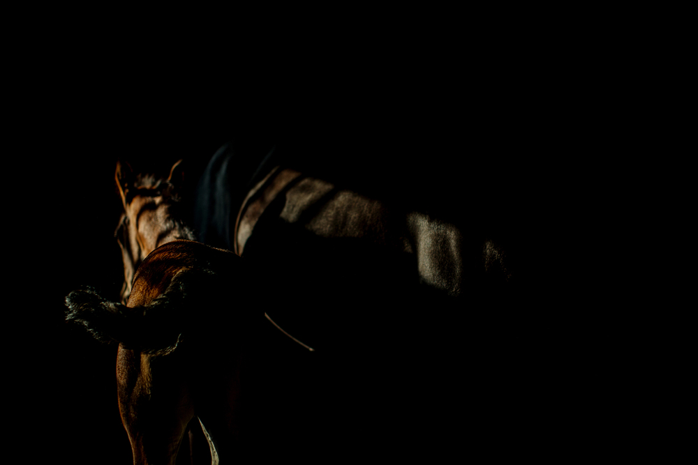 Equine Photography Saratoga Springs NY20.jpg