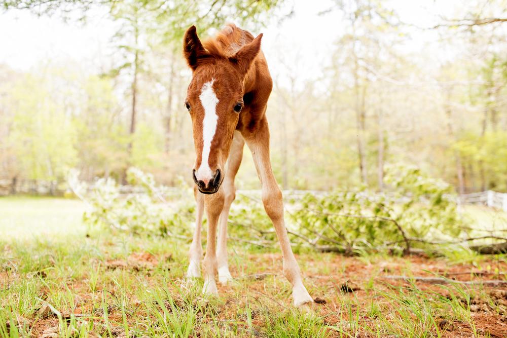 Horse Photography Saratoga Springs NY25.jpg