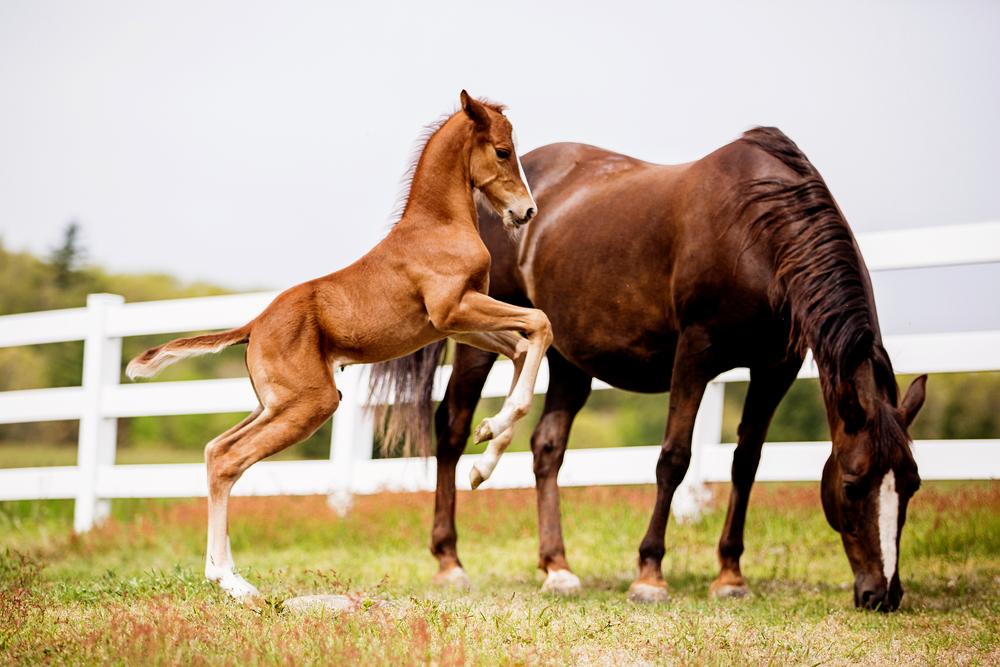 Horse Photography Saratoga Springs NY30.jpg