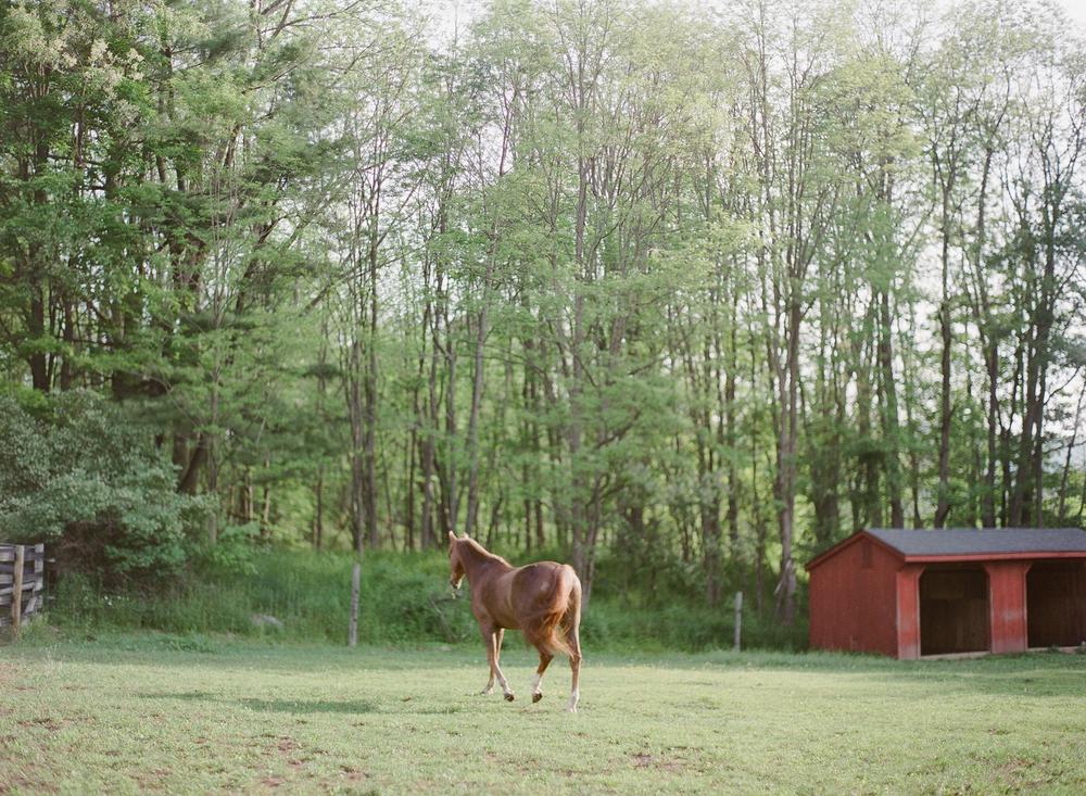 Horse Photography Saratoga Springs NY04.jpg
