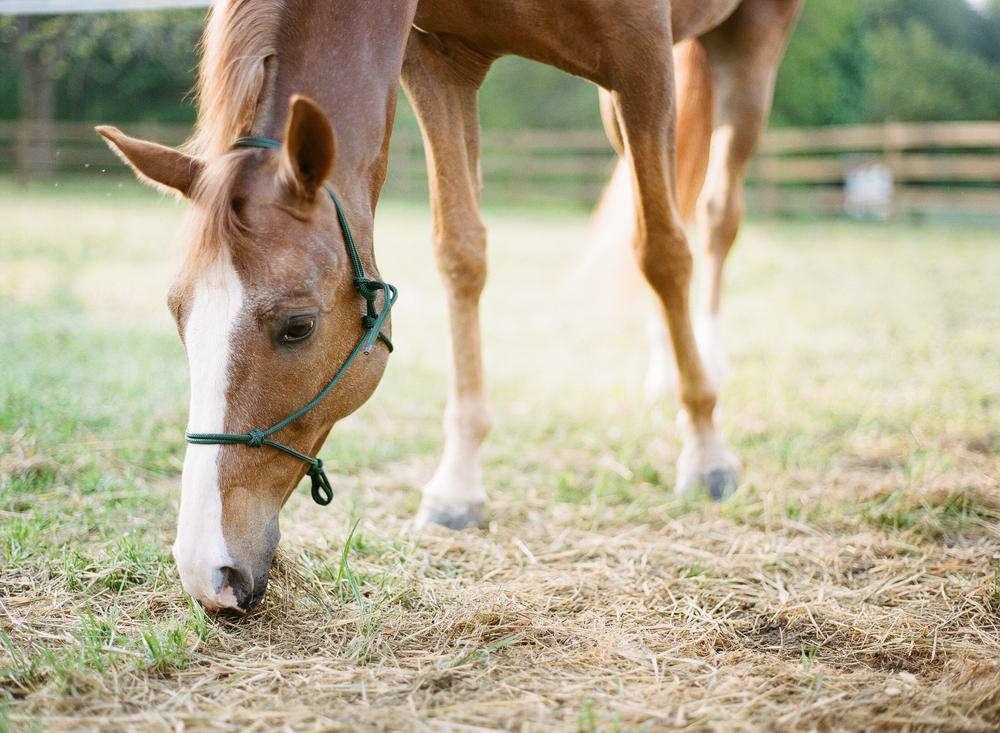 Horse Photography Saratoga Springs NY06.jpg