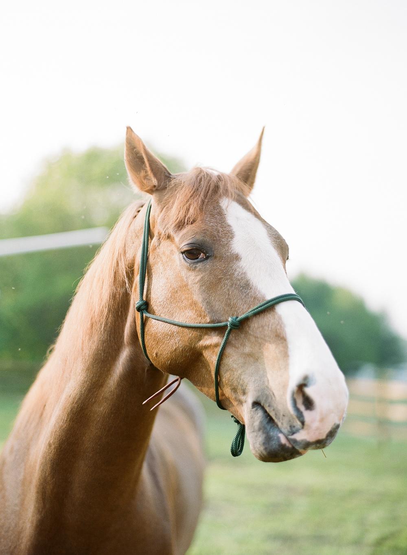 Horse Photography Saratoga Springs NY09.jpg