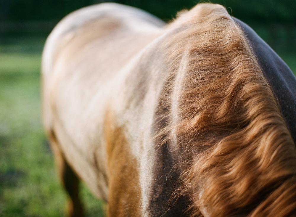 Horse Photography Saratoga Springs NY12.jpg