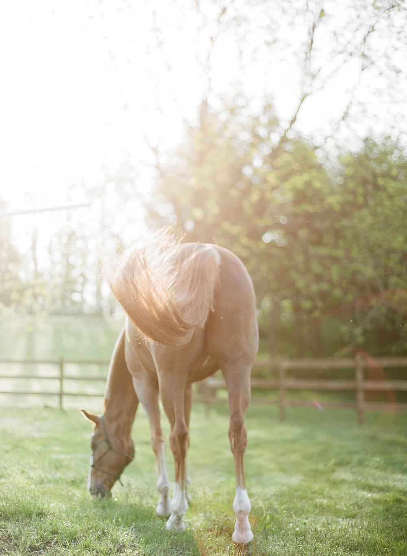 Horse Photography Saratoga Springs NY13.jpg