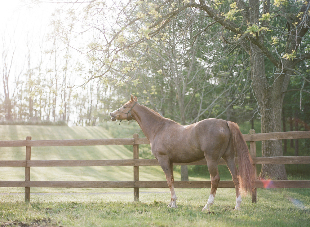 Horse Photography Saratoga Springs NY16.jpg