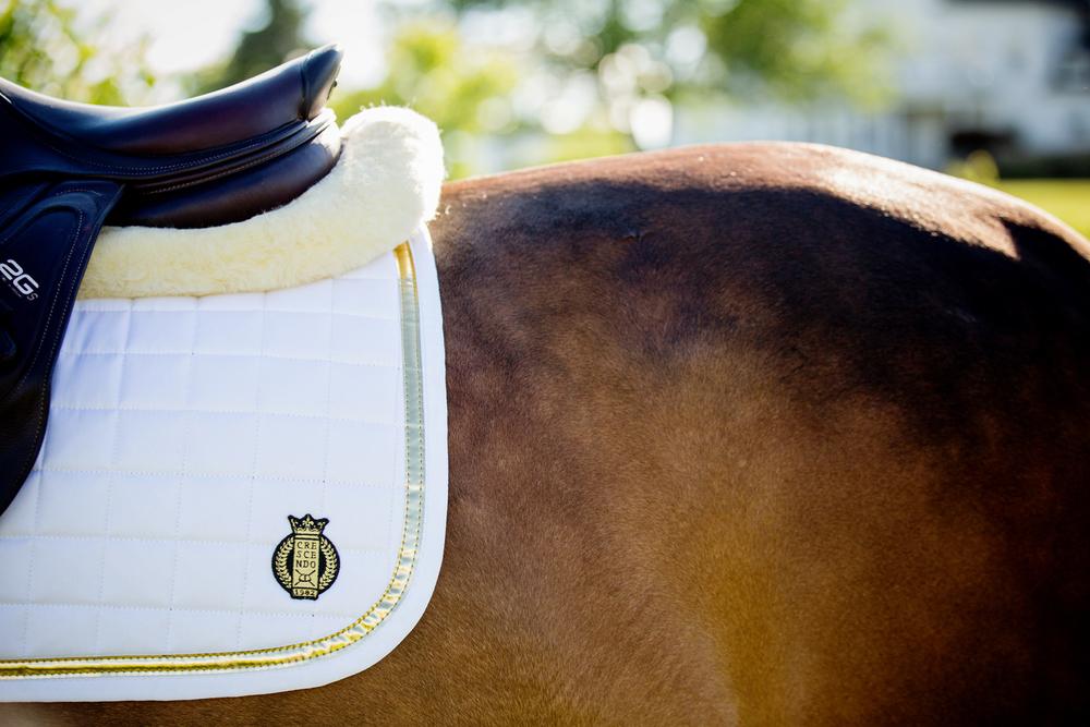 equestrian horse photography saratoga ny36.jpg