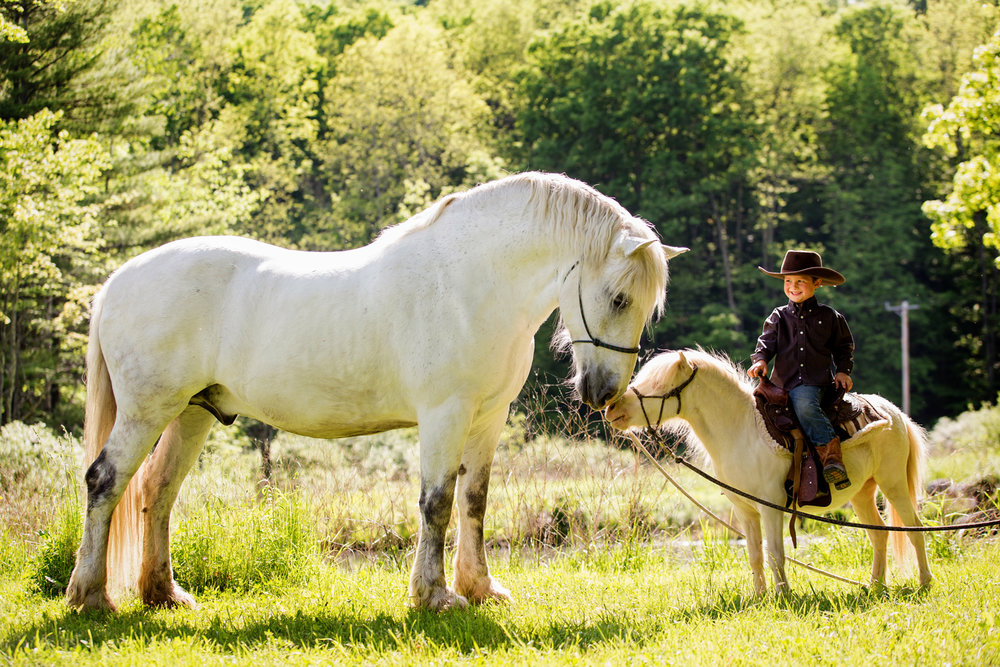 horse photography saratoga ny20.jpg