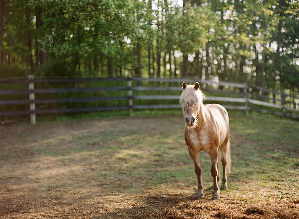 saratoga ny horse photographer24.jpg