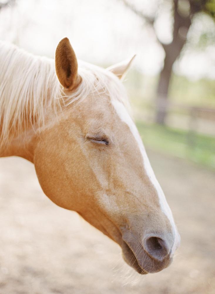 saratoga ny horse photographer28.jpg
