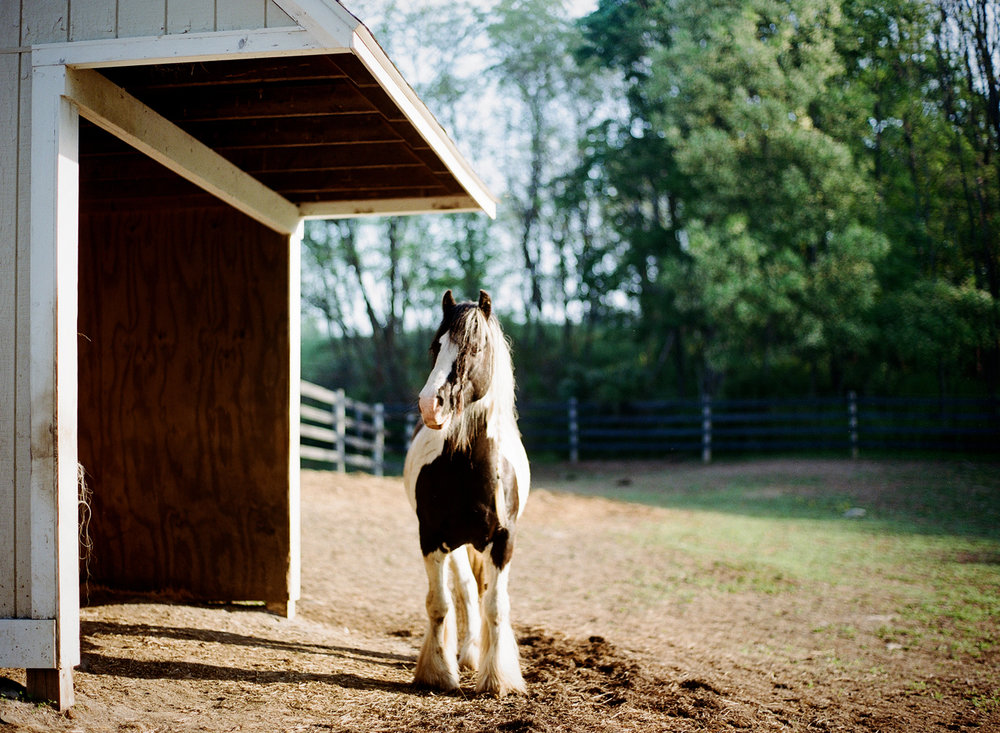 saratoga ny horse photographer30.jpg