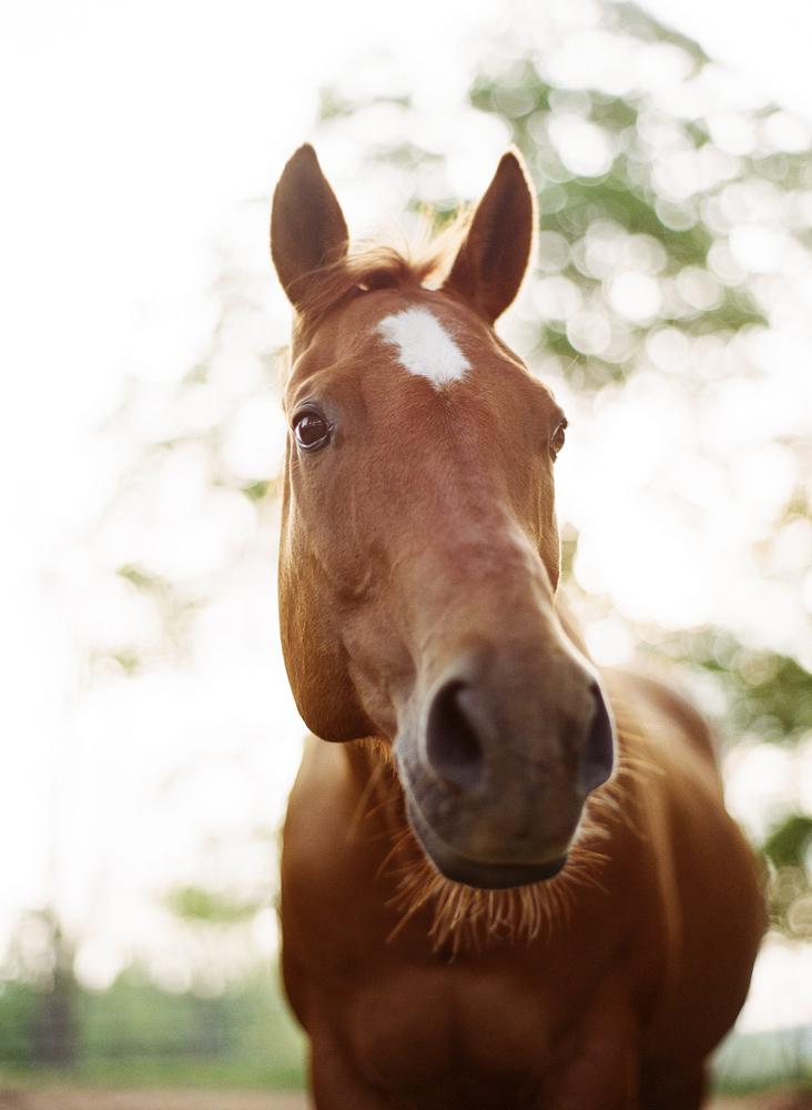 saratoga ny horse photographer32.jpg