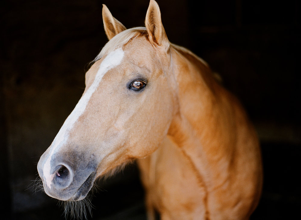 saratoga ny horse photographer34.jpg
