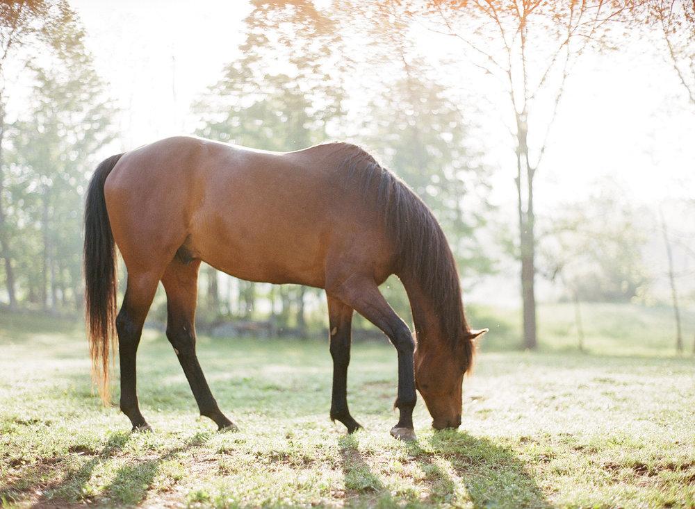 saratoga ny horse photographer36.jpg