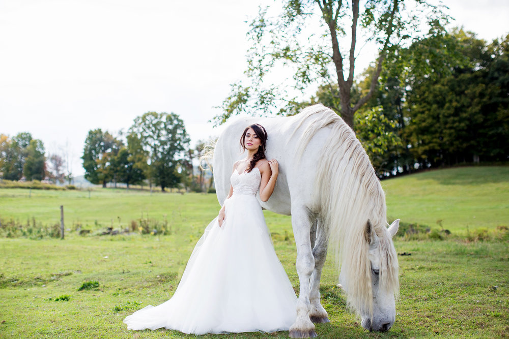 wedding horses saratoga ny53.jpg