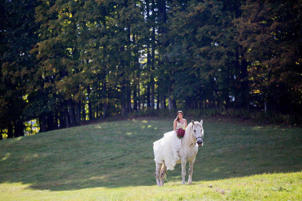 wedding horses saratoga ny63.jpg