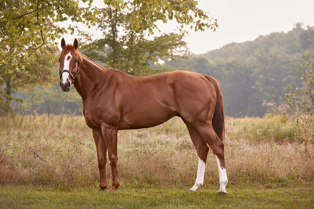 "r. Zenman (KY)  Barn Name: ""Red""  Year: 2012  Dam: Convergence  Sire: Zensational  Starts: 4  Reason for Retirement: Tendon injury - Red came into the New Vocations Racehorse Adoption Program after he was rehabilitated from his injury.  Adopted: 9.27.16 as a trail/pleasure horse in Oklahoma  Fun fact: Mr. Zenman, ""Red,"" was born on April Fool's Day with a goofy, low-key personality, making him impossible not to love. He always greeted barn-goers with a cheerful whinny, and loved to scarf down treats anytime he they were offered to him. Red still loves his treats. He also loves to be ridden both indoors and out."