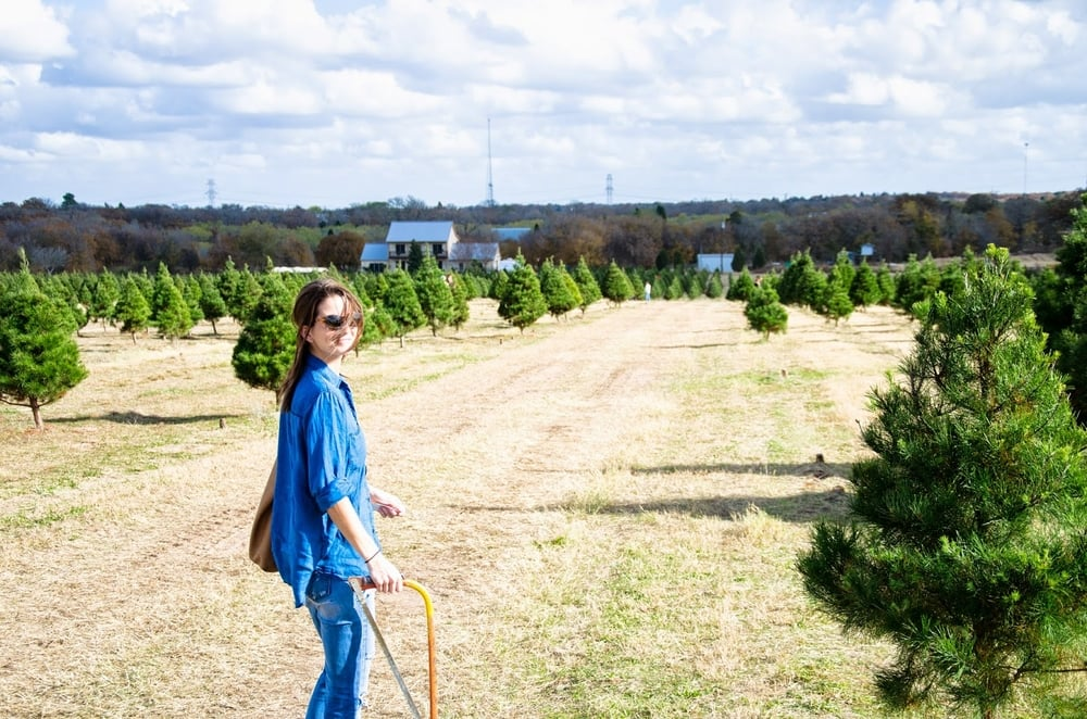 Elgin Christmas Tree Farm.Elgin Christmas Tree Farm Life On Pine