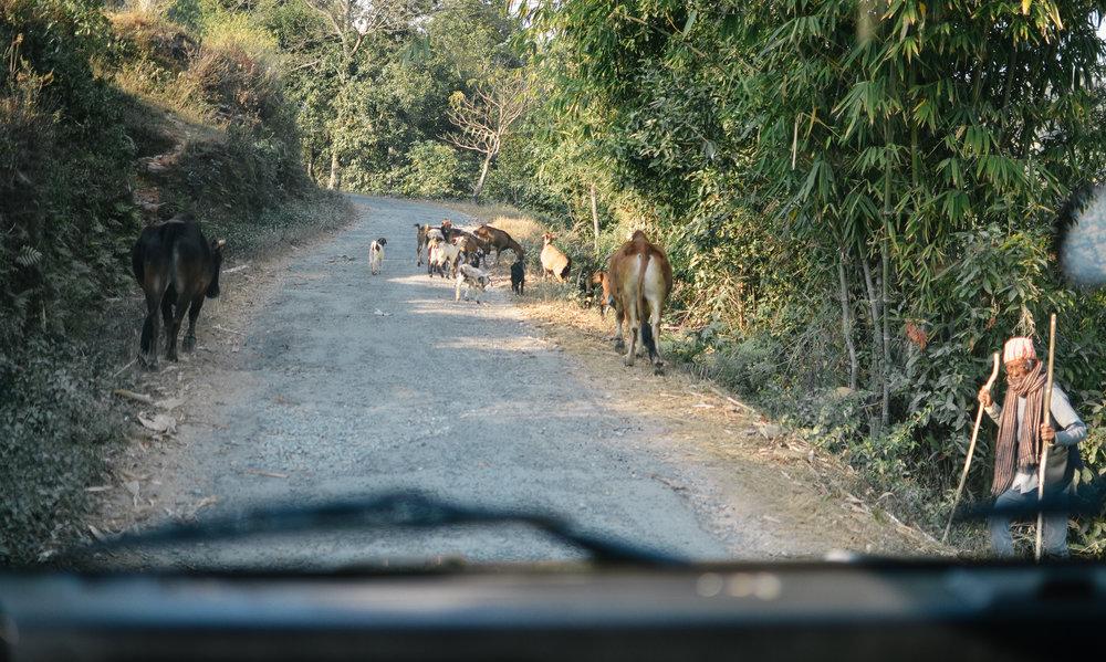 Pokara-Mountain_Lodge-Nepal-LifeonPine_DSC_0683.jpg