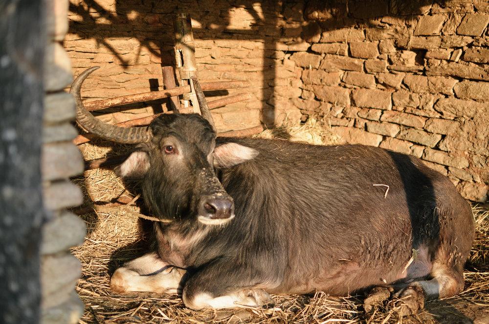 Pokara-Mountain_Lodge-Nepal-LifeonPine_DSC_1091.jpg