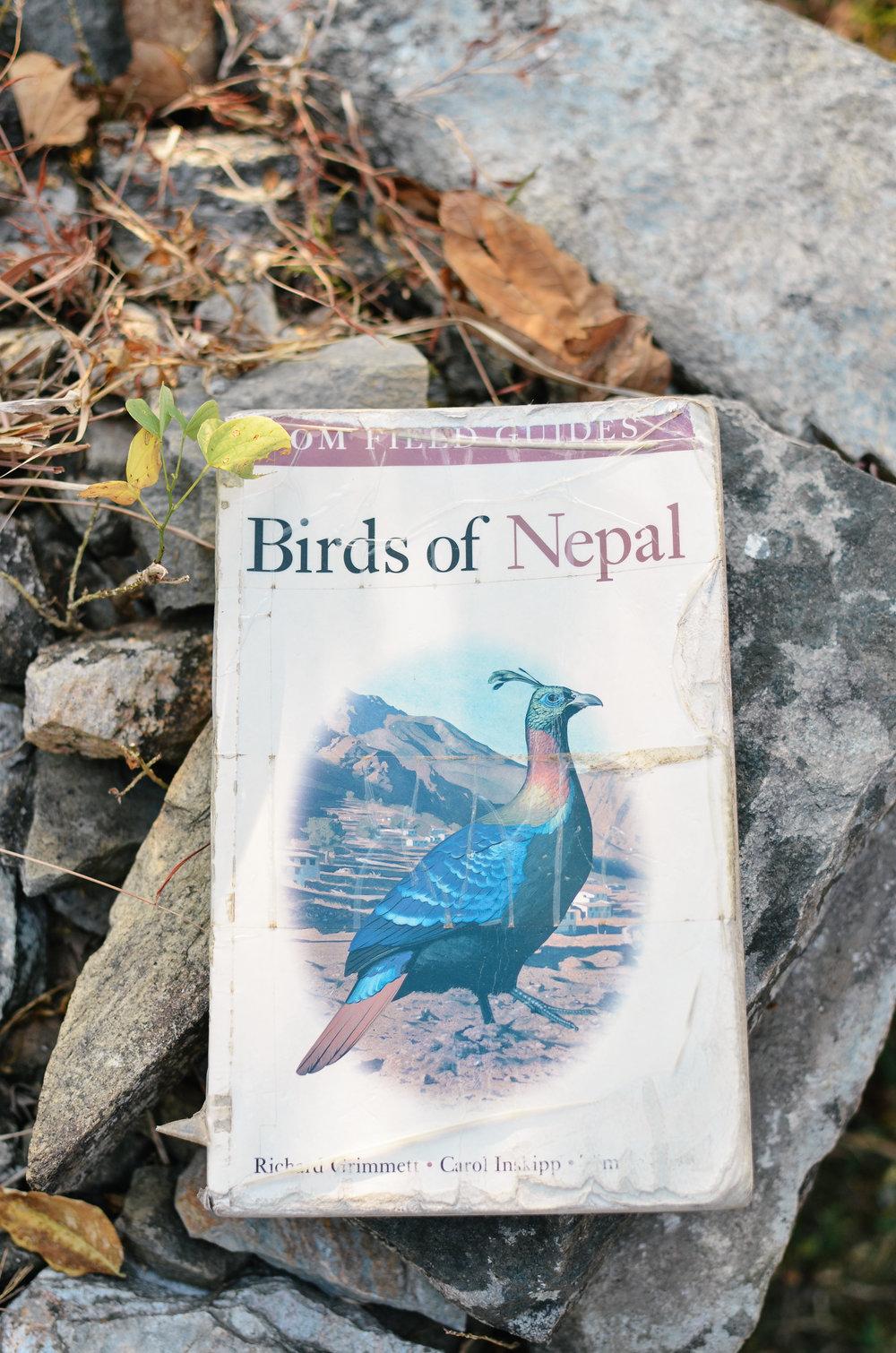pokara-mountain-lodge-nepal_DSC_1083.jpg