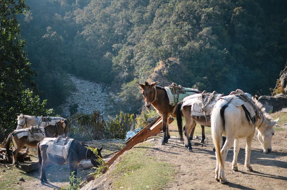 nepal-trek-annapurna_DSC_1171.jpg