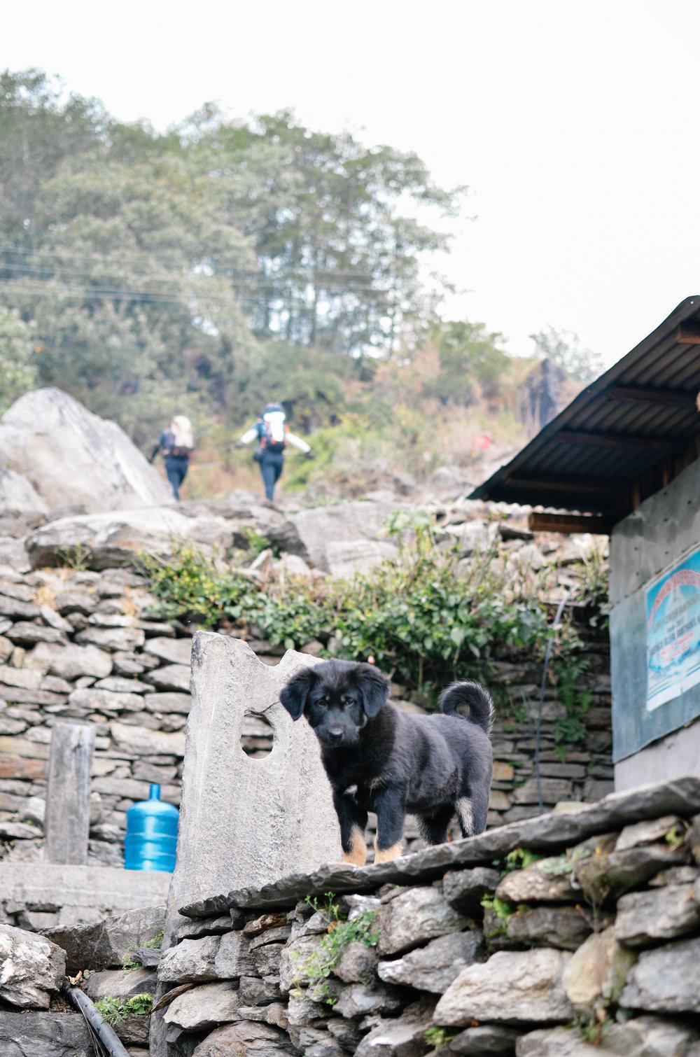 nepal-trek-annapurna_DSC_1187.jpg