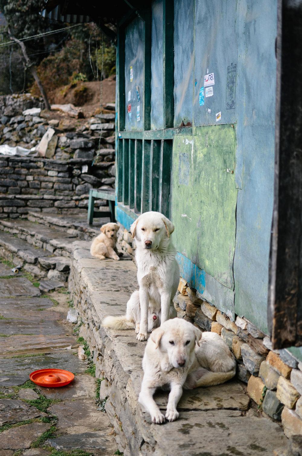 nepal-trek-annapurna_DSC_1242.jpg