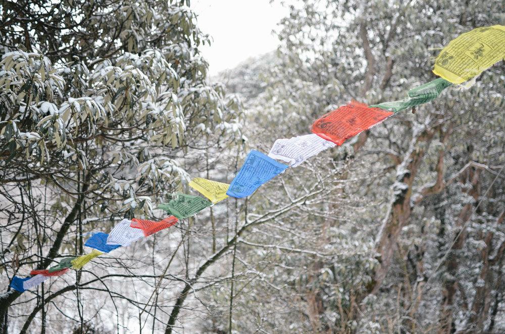 nepal-trek-annapurna_DSC_1264.jpg
