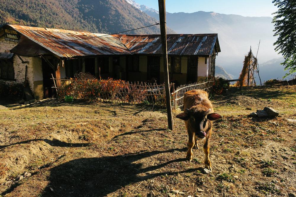 nepal-trek-annapurna_IMG_0849.jpg