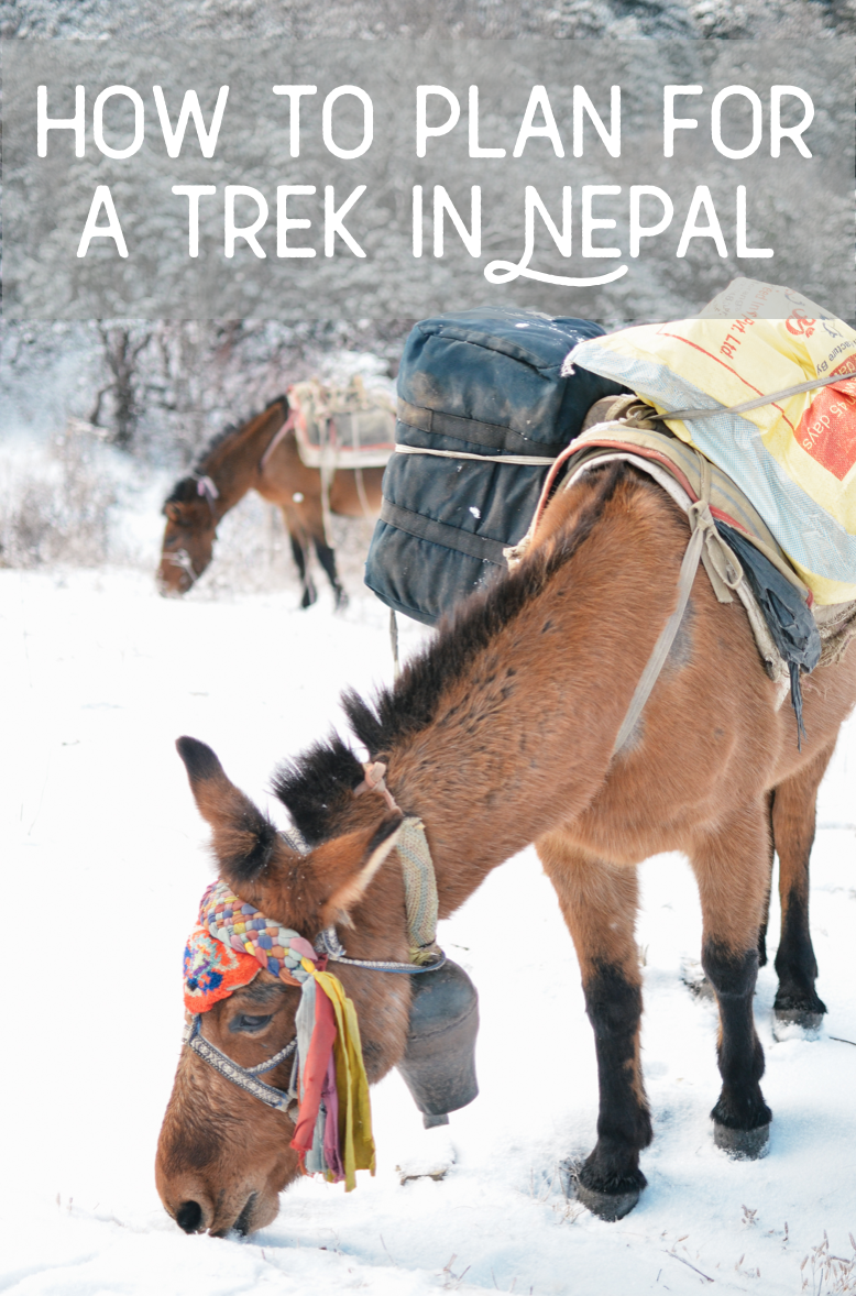life-on-pine-trekking-in-nepal-annapurna.png