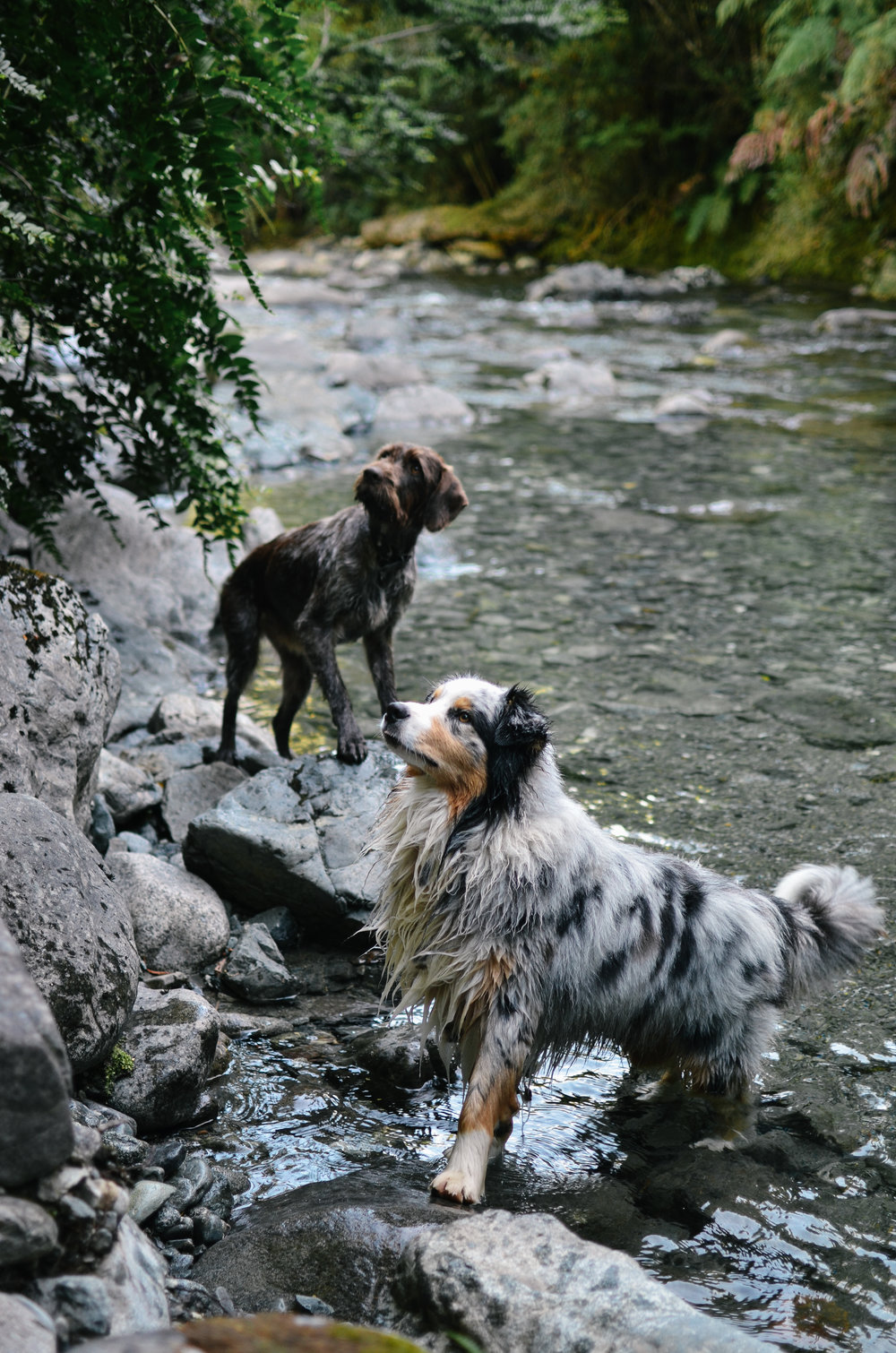 ^ there is a stunning waterfall on the property only a 10 minute walk. these two lead the way
