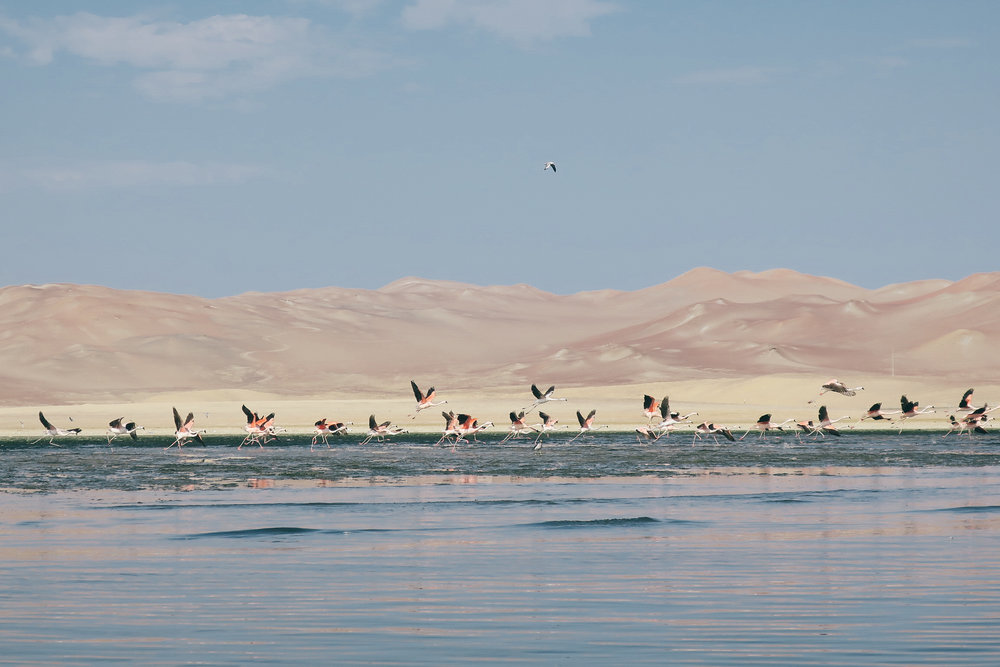 paracas+peru+travel+guide+life+on+pine_IMG_2143.jpg
