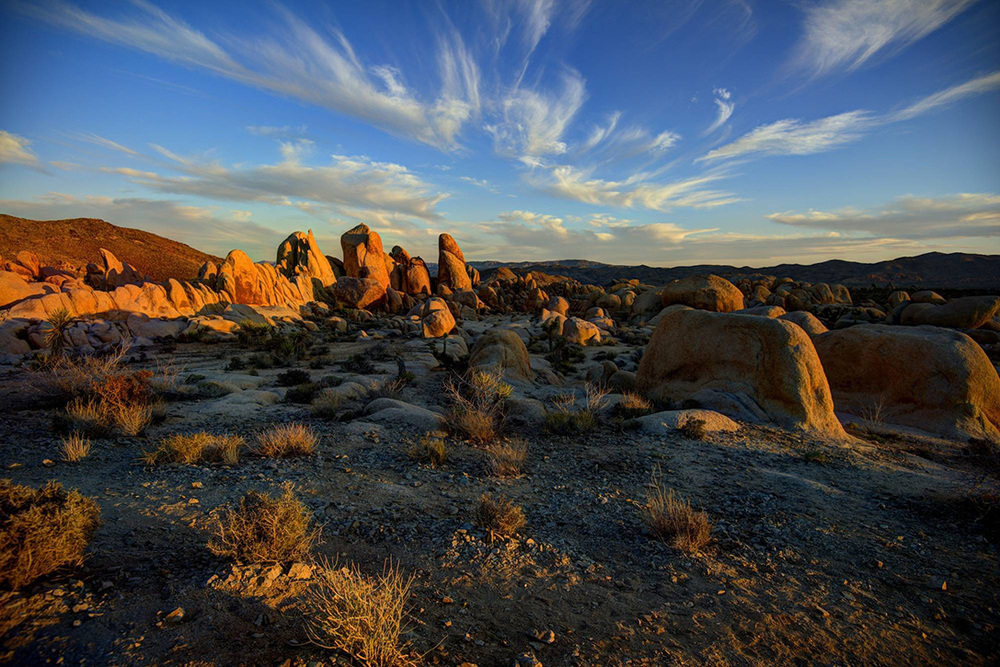 Joshua-Tree-National-Park-California.jpg