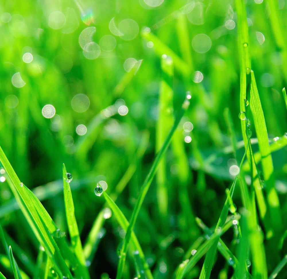 green-grass-and-water-drops_1.jpg