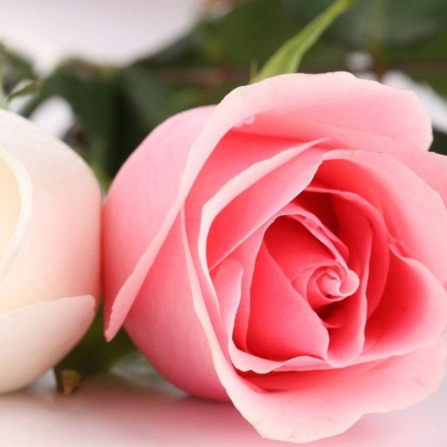 best_flowers_images11.jpg
