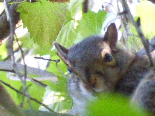 6.  Squirrel