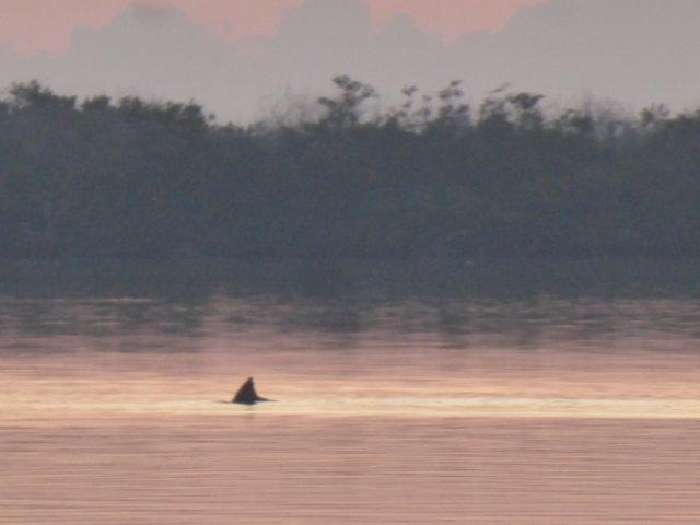 13. Bottlenose Dolphin