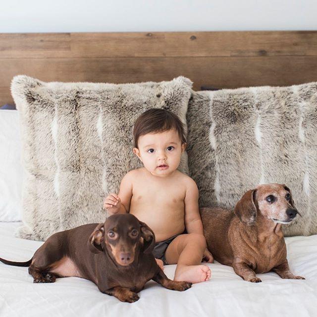 Her protectors #weinerdog