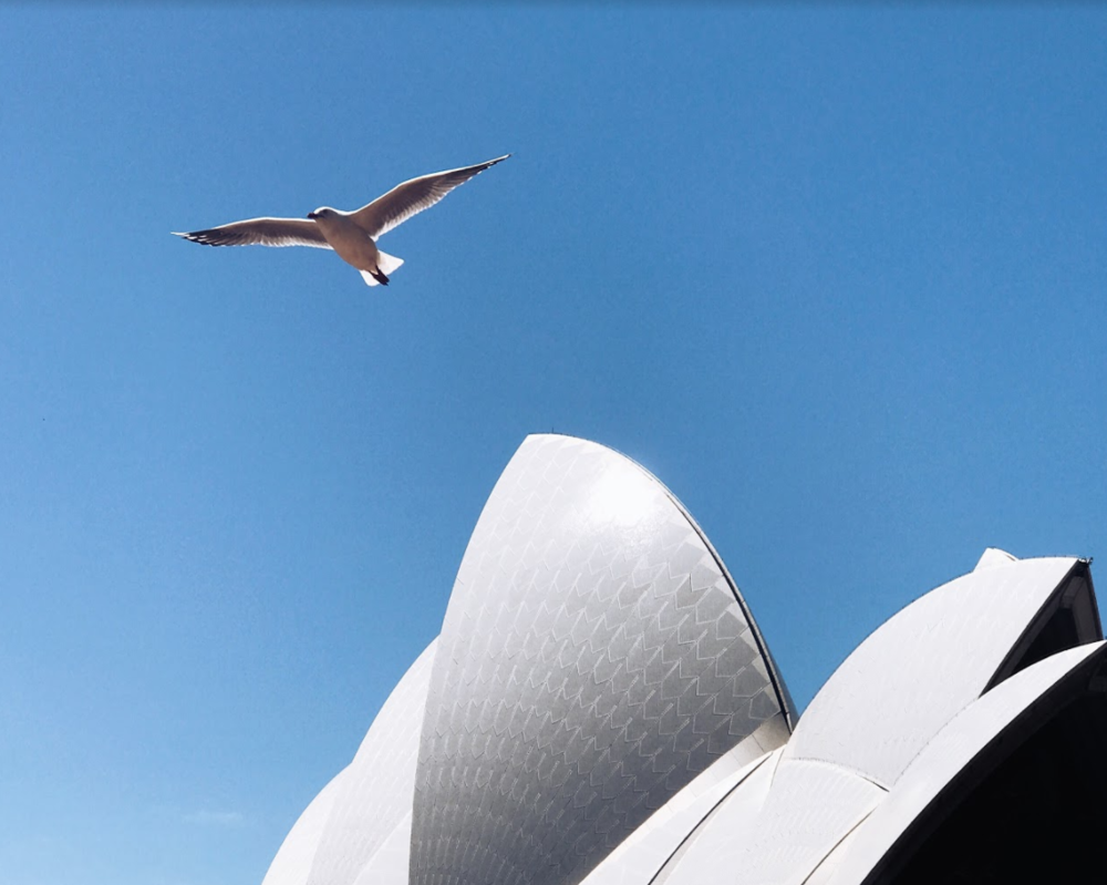 Born free  (Sydney) | #flight   #icon   #freedom