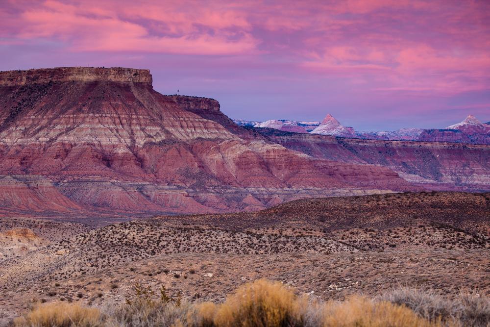 Desert Pinks