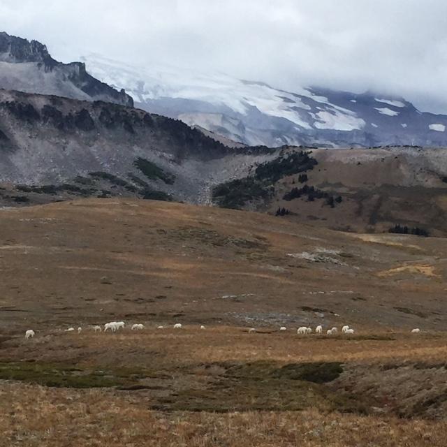 sheepherders.jpg