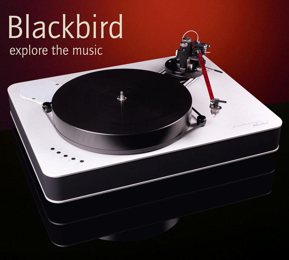Blackbird_03.jpg