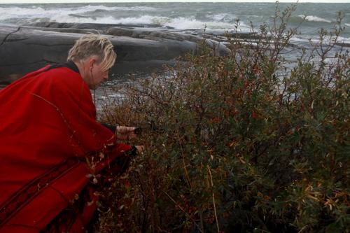Sea Buckthorn berries and sauna in Finland