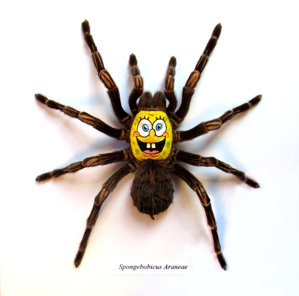 Spongebobicus - Acrylic on taxidermy spider. 2015