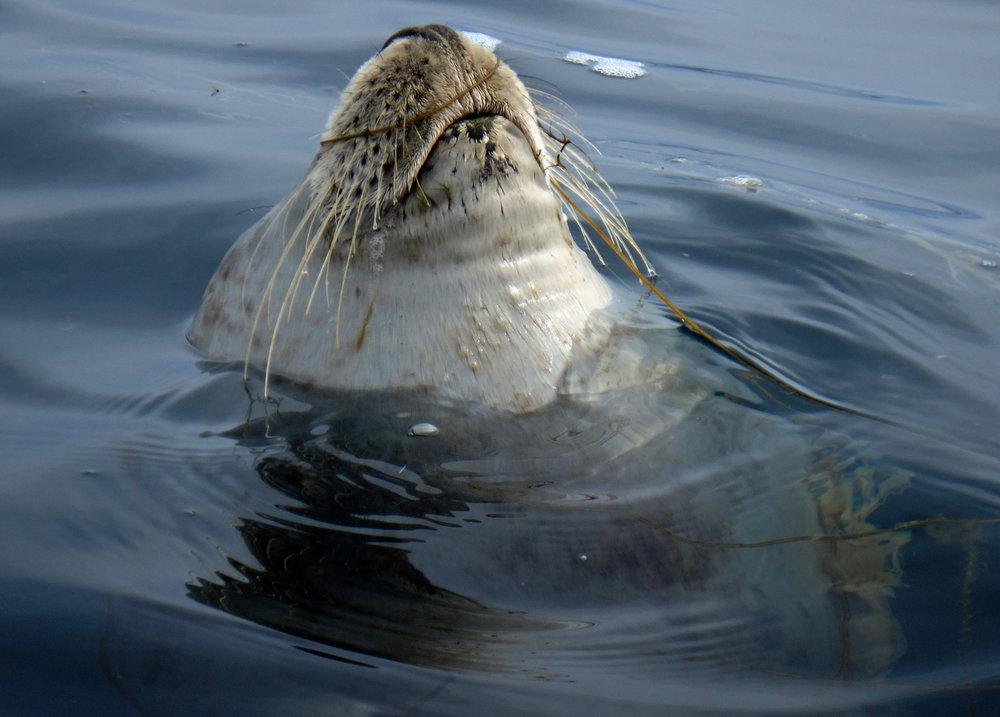 Slumbering Seal.jpg