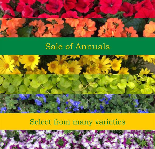Sale-of-Annuals-2016-2.jpg